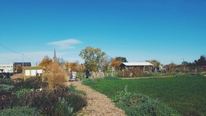 Alice's Garden, where Director Venice Williams met LOPPW staff & interns
